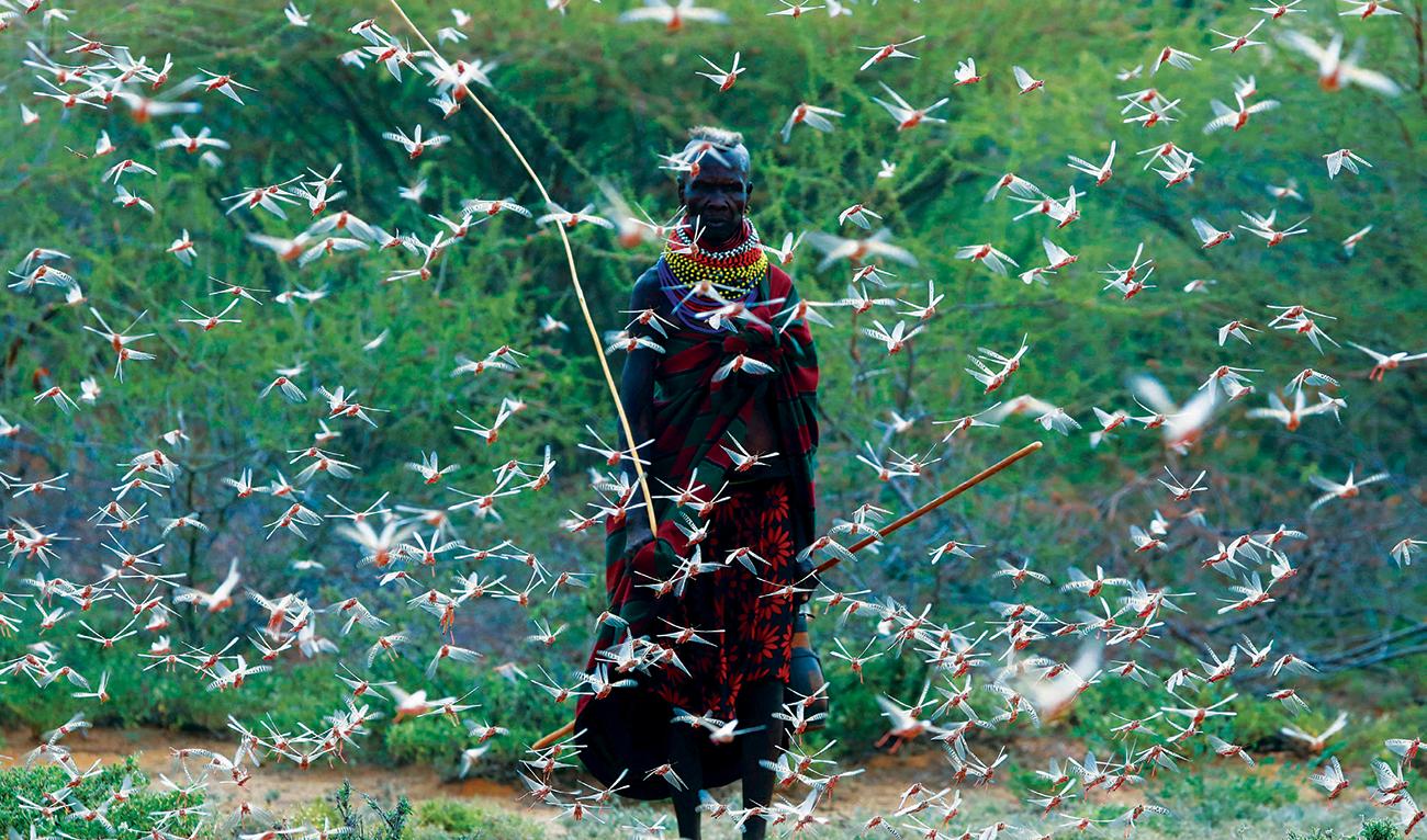 Worst outbreak of locust in Kenya is far from over   Arab ...